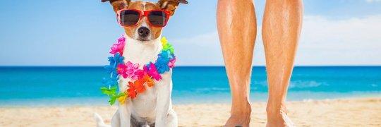 Vacaciones con tu Mascota Apartamentos Magic Atrium Beach